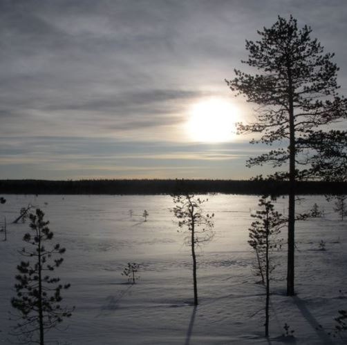 Jakt Gällivare Allmänningsskog