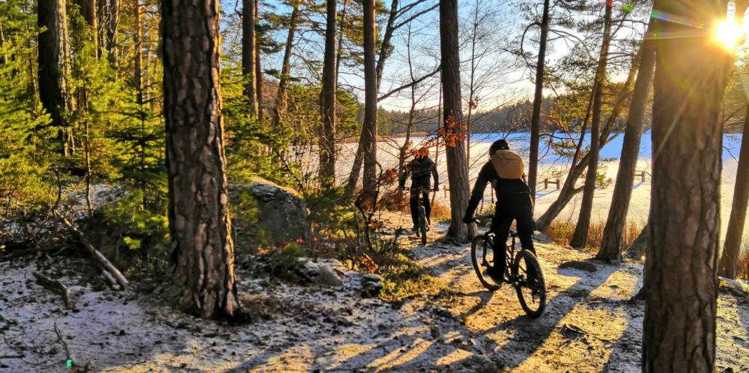 Mountainbike skogen